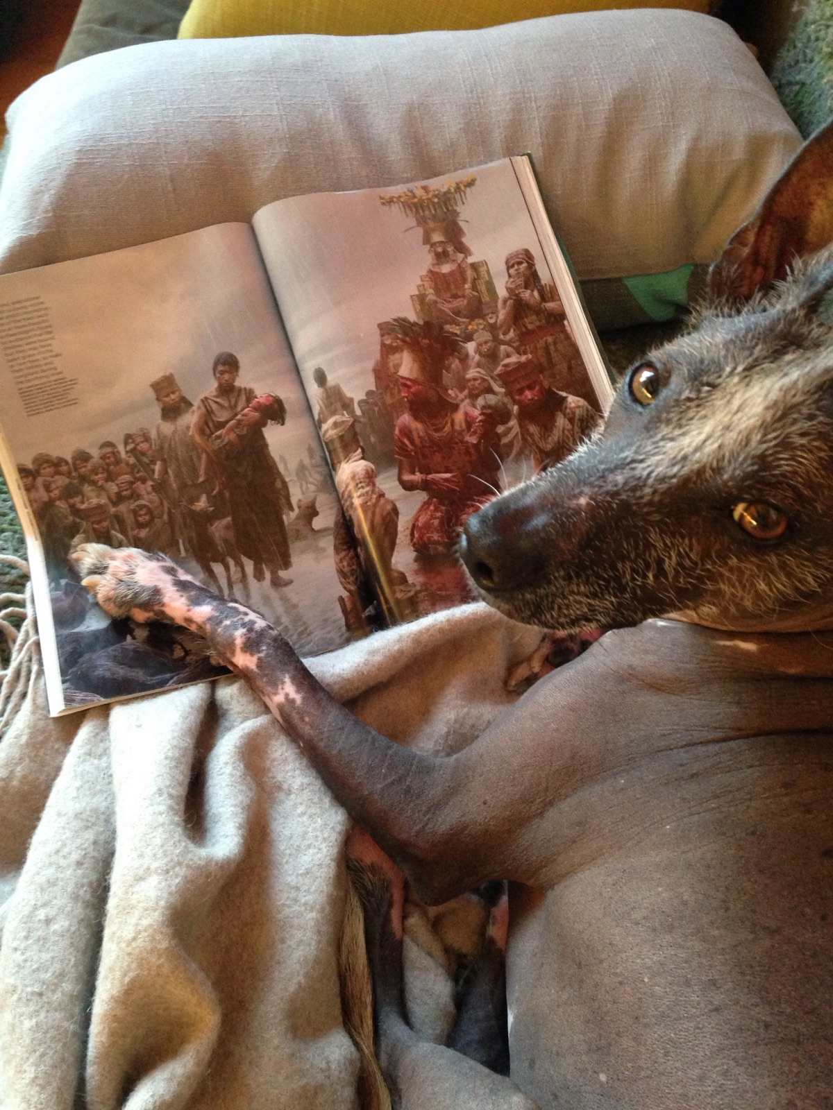 Kish-Kish Guengerich reading a recent National Geographic article about Central-Coast child sacrifices, with an artwork that features perros calatos.