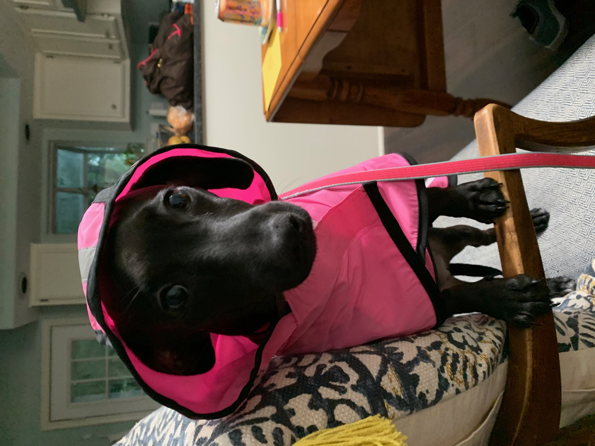 Lucy Robbins Rocking her rain jacket and chilling after a long walk