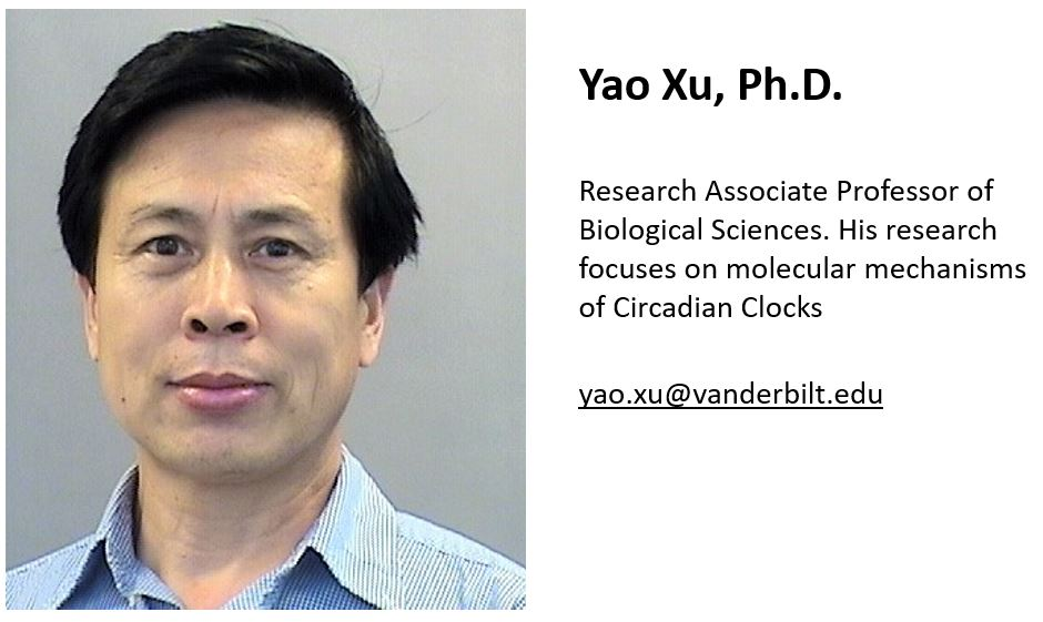 Yao_Xu_Biography